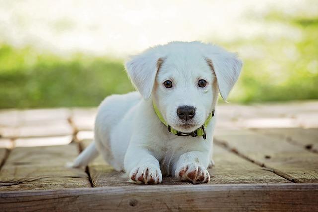 ברידרס מזון לכלב