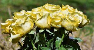 פרחים בחולון