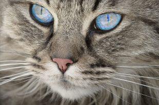 ביטוח לחתולים