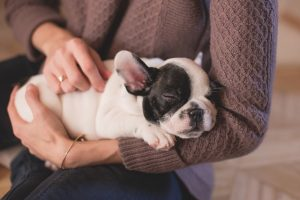 מנוי לחיסונים לכלבים