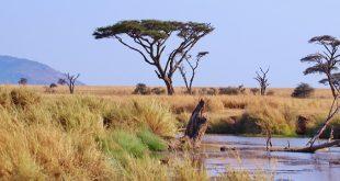 כמה עולה טיול לטנזניה