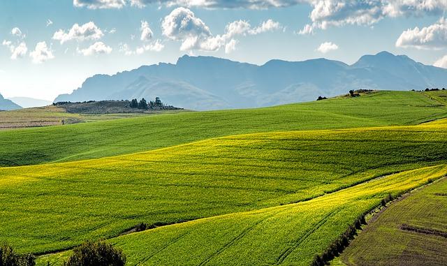 שטח חקלאי למכירה