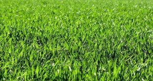 עלות דשא סינטטי