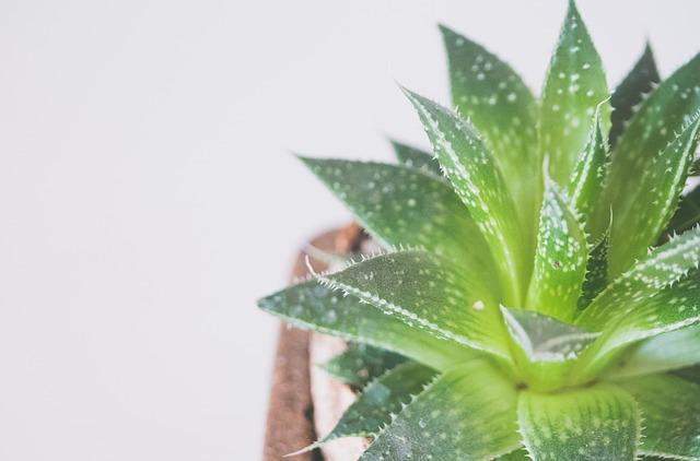 צמחיה מלאכותית דקורטיבית לבית